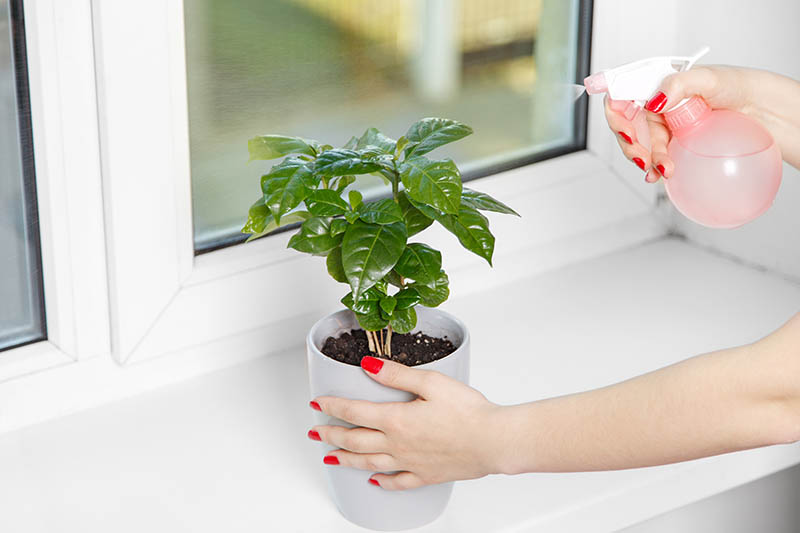 Best Indoor Plants For Your Apartment Ovation Blog